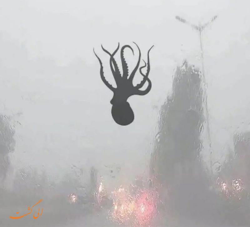 پدیده عجیب باران هشت پا در چین!