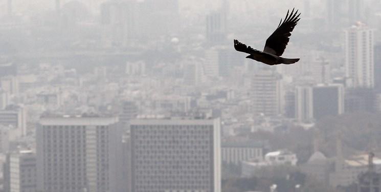 آلودگی هوا روی نتیجه امتحانات تأثیر منفی می گذارد