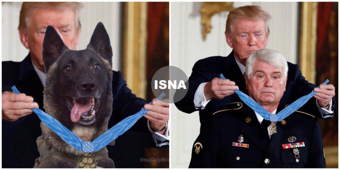 جدیدترین گاف ترامپ ، نیویورک تایمز: تصویر اهدای مدال به سگ یابنده البغدادی جعلی است