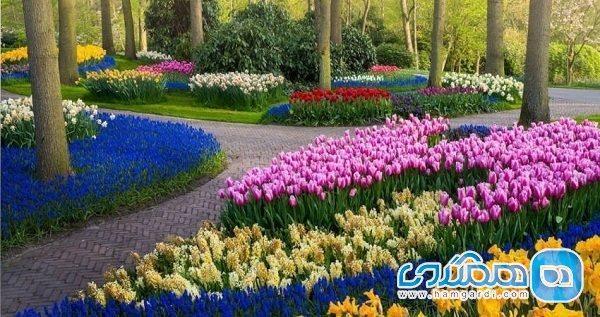 باغ های بدون بازدیدکننده لاله هلند در دوران کرونا