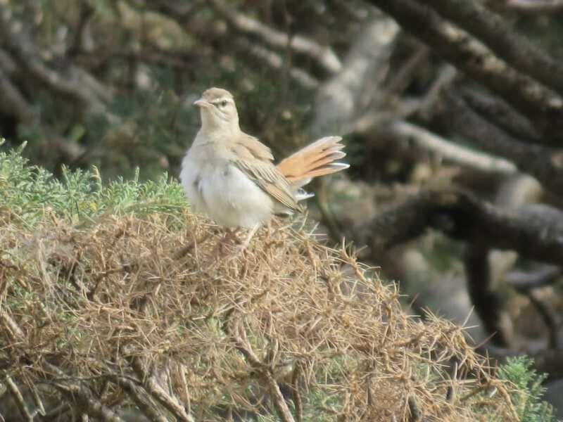 خبرنگاران 3 گونه پرنده جدید در چهارمحال و بختیاری ثبت شد