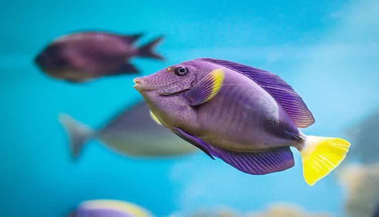 تعبیر خواب ماهی زنده ؛ ماهی دیدن در خواب نشانه چیست؟