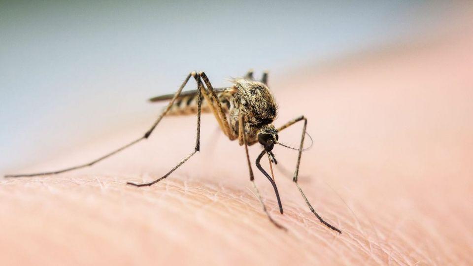 پشه ها ناقل کرونا هستند؟!