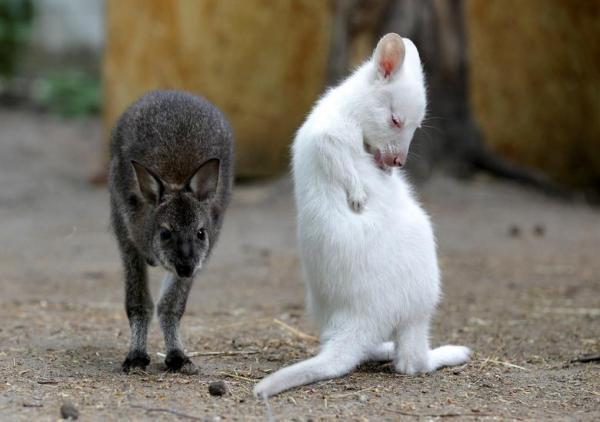 حیوانات زال در جهان